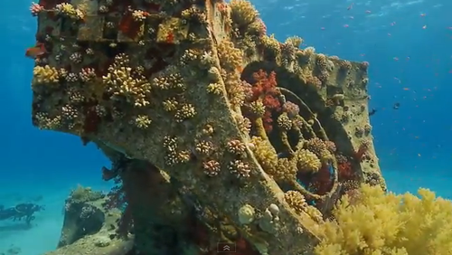 Divers willingness to pay for biodiversity could help conservation efforts