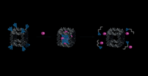 DNA 'cages' may aid drug delivery