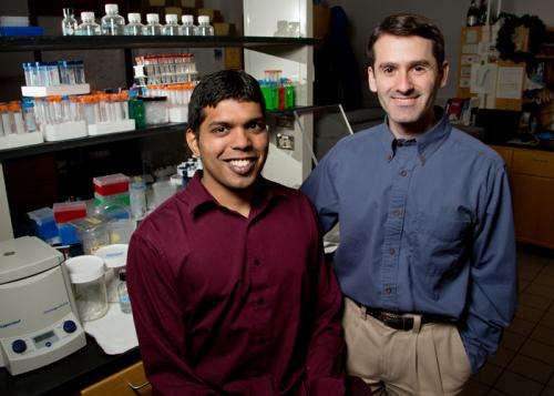 DNA catalysts do the work of protein enzymes