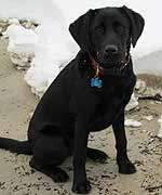 Dog days of winter: keeping pets safe, warm