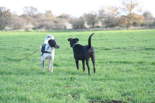 Dogs know a left-sided wag from a right