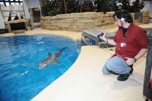 Dolphins keep lifelong social memories, longest in a non-human species