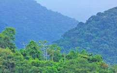 Drought does long-term damage to rainforest
