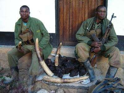 Elephants are vanishing from DRC's best-run reserve