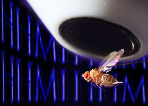 Enigmatic Neurons Help Flies Get Oriented
