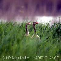 Europe's natural habitats under threat