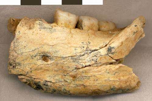Features of southeast European human ancestors influenced by lack of episodic glaciations