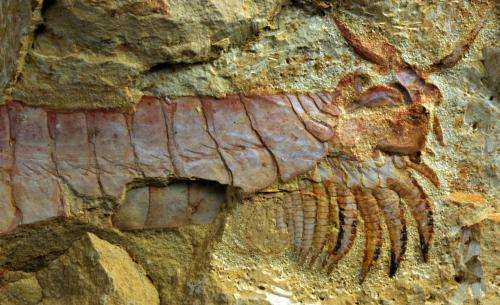 Feeding limbs and nervous system of one of Earth's earliest animals discovered