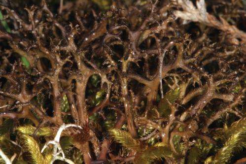 Flexible partnership allows lichens to occur in different habitats