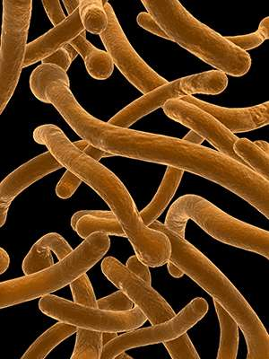 Fungal biology: Finding yeast's better half