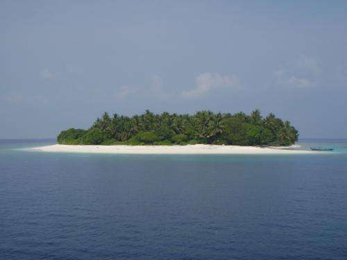 Future sea level rises should not restrict new island formation in the Maldives