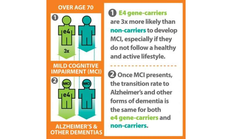 Gene is marker only for mild cognitive impairment