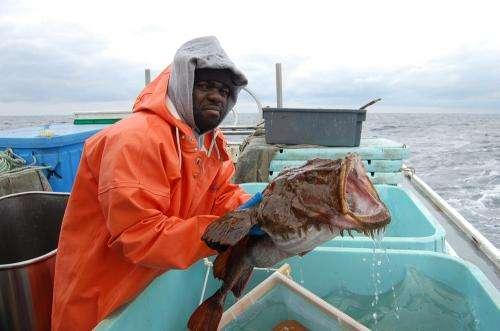 Goosefish capture small puffins over deep water of Northwest Atlantic