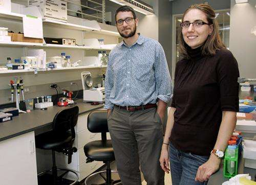 Gravity plays a role in keeping cells small