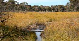 Groundwater research may be forest lifesaver