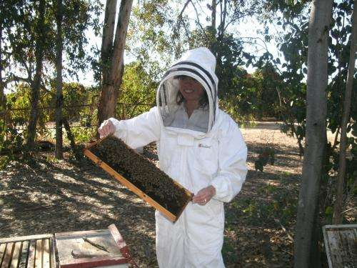 Health of honey bees adversely impacted by selenium