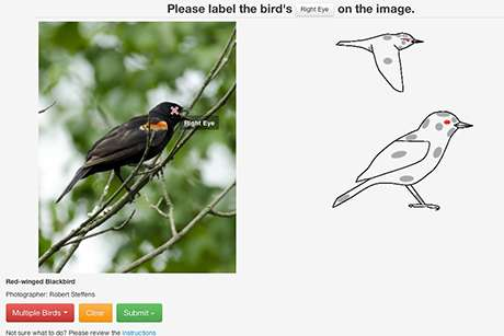 Help 'Merlin' become a wizard at identifying birds