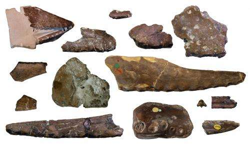 High diversity of flying reptiles in England 110 million years ago