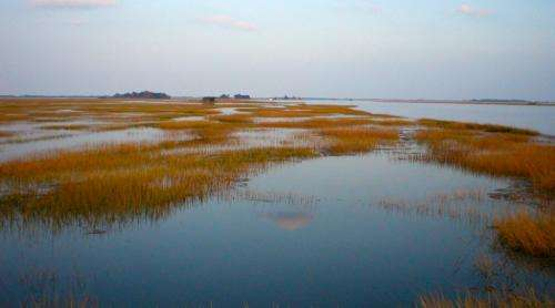 Humans threaten wetlands' ability to keep pace with sea-level rise