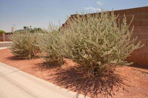 Homeowner associations can support native species in suburban neighborhoods
