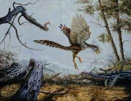 How birds got their wings