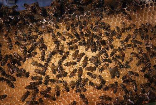 How do bees make honey? (It's not just bee barf)