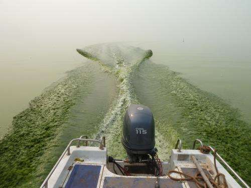 Increasing toxicity of algal blooms tied to nutrient