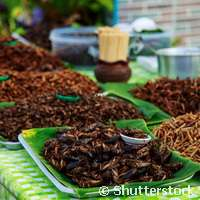 Insects can support livestock production