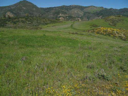 Invading species can extinguish native plants despite recent reports