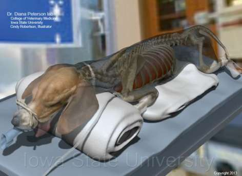 Iowa State University anatomy expert is creating digital models to train surgical students