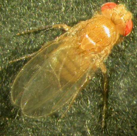 Learned helplessness in flies and the roots of depression