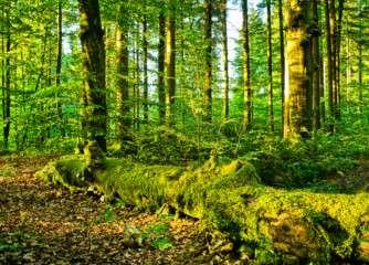 Lilliput forests, global certification