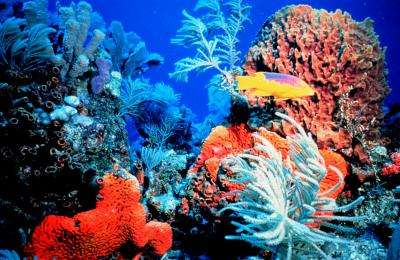 Major changes needed for coral reef survival