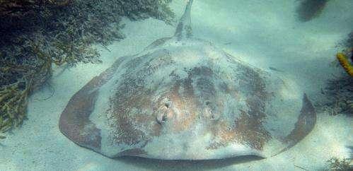 Marine life spawns sooner as oceans warm