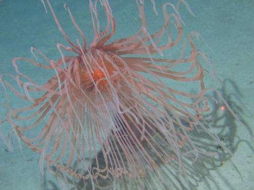 Marine scientists explore biodiversity and ecosystems in Irish waters