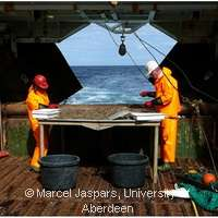 Mining for new drugs in the ocean
