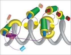 Molecular VELCRO for chromosome stability