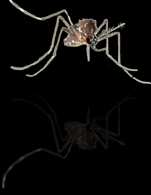 Mosquitoes exposed to DEET once are less repelled by it a few hours later