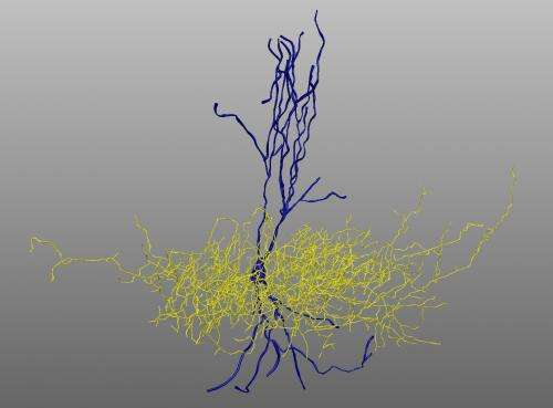 Mutations found in individuals with autism interfere with endocannabinoid signaling in the brain