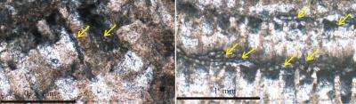 Mystery of before 370 Ma coral-stromatoporoid reef disappearing from the planet Earth