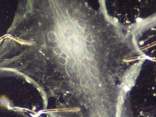 Nerve cells can work in different ways with same result