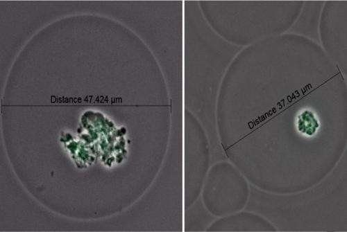 New culturing tool reveals a full genome from single cells