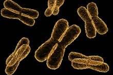 New genetic risk factor found for schizophrenia
