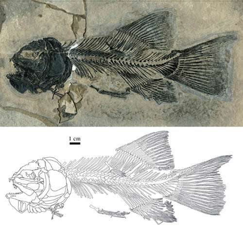 New materials of caturoid fish discovered