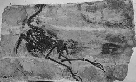 New Piscivorous bird found from the Lower Cretaceous of western Liaoning, China