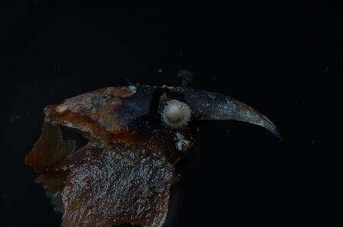 New species recovered from Amundsen Sea