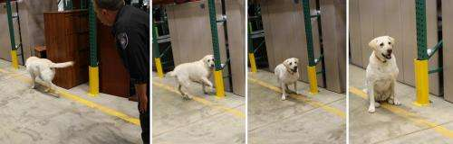 NIST nose a hit when they smell it: A new generation of odor-releasing materials for training dogs
