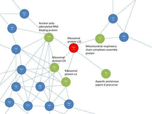 Novel insights into the evolution of protein networks