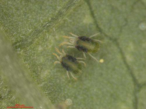 Novel natural nanomaterial spins off from spider-mite genome sequencing