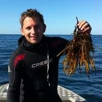 Ocean heatwave decimates vital WA seaweed habitat